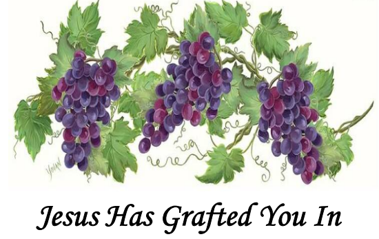 Jesus Has Grafted You In